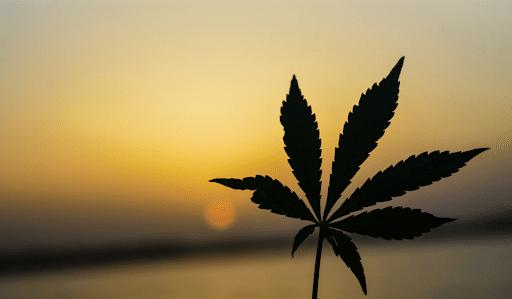 What the Marijuana Tax Revenue Numbers Tell Us